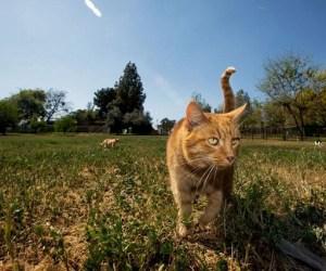santuario de gatos17