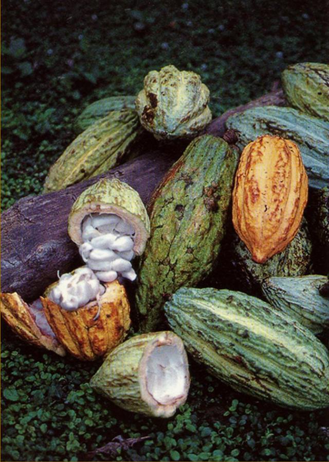 semillas_cacao