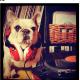 La mejor DJ es esta Bulldog Francés