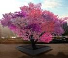 ¿Por qué este árbol da más de 40 frutos?