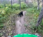 Microinfarto: va en bicicleta y se le atraviesa un oso... ¿qué?