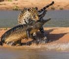 Galería: Las imágenes nominadas al Wildlife Photographer of the Year 2014