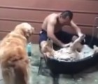 El baño a un perro que todos envidiamos