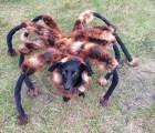 Y con ustedes... el temible perro araña