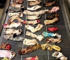 WTF?!?! Encontraron 43 calcetines en el estomago de un perro Gran Danés