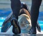 ¿Por qué no visitar SeaWorld?