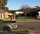 Sólo en Australia: Dos canguros peleando en la calle