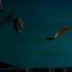 "Sopitas.com premiere: Mira el video animado de James para ""All I'm Saying"""