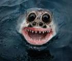 Photoshop nos muestra una perturbadora mirada a la evolución