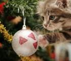 Los gatos odian la Navidad más que tú