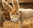 Awww Ternuringa!!! Raggle, el perrito que se disfraza cada Navidad