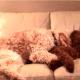 Perrito teniendo pesadillas es salvado por su mejor amigo