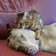 Gato hipnotiza a su amigo perro
