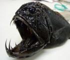 Algunos de los animales más extraños en el océano