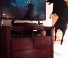 Perro enloquece al ver a Rocket Raccoon en televisión