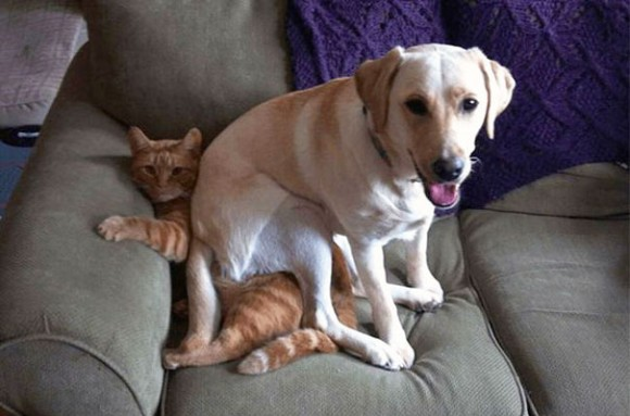 Dogs-Can-Be-Jerks-Too-__605