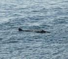 ¡Fotografían misteriosa criatura marina en costa británica!