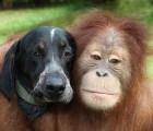 """¡Se nos derrite el corazón!: Extrañas """"amistades"""" animales... y la ciencia detrás"""