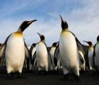 Paul Nicklen y la urgencia detrás de la foto de conservación