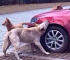 Hombre patea a un perro... El perro y sus amigos se vengan