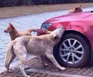 Stray.dog.attacks.car.1