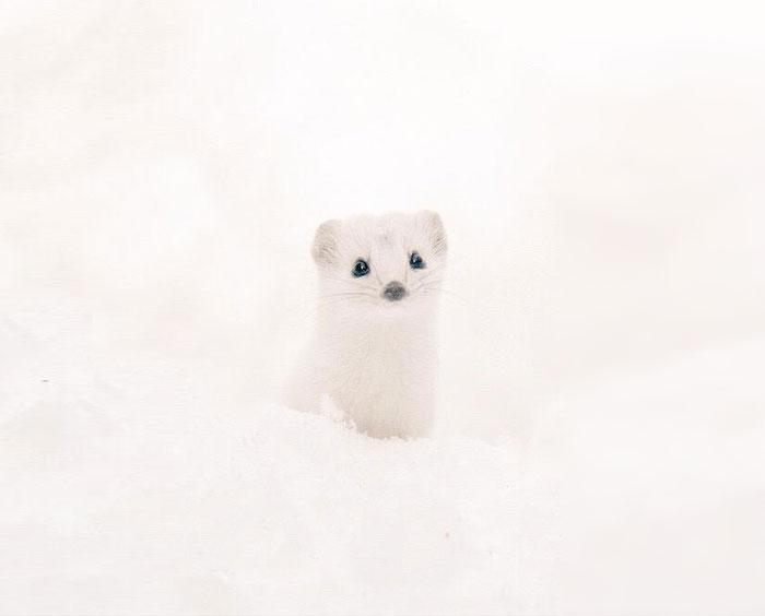 cute-animals-hokkaido-ezo-japan-34