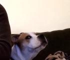 El perro que odia el Playstation