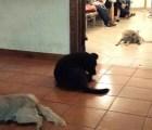 Una jauría de perros asiste al velorio de una mujer