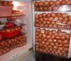 WTF!!?? se robó más de 1000 huevos para consumo personal