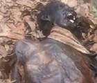 Encuentran momia en Chapultepec... ¿es en serio?