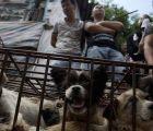 A pesar de las protestas, ayer se celebró el Festival de Carne de Perro en China