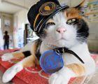 Ahhh... murió Tama, la gata japonesa que además era jefe de estación de trenes
