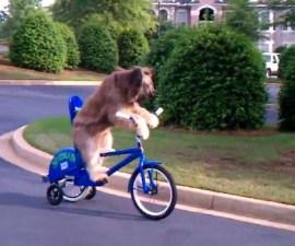 perro_bicicletero