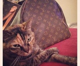 gato_rico_instagram_1
