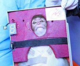 Irán lanzó un mono al espacio