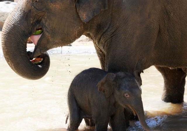 mama_hijo_elefantes_7