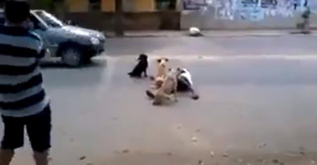 perros-cuidan-dueno-borracho