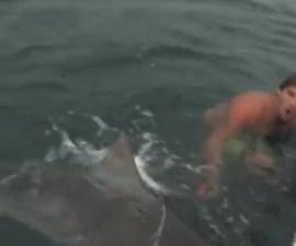 pelea_tiburon