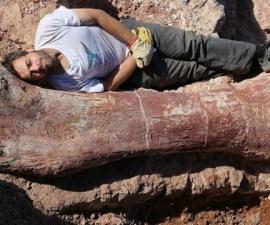 fósil argentino01