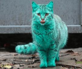 gato_verde_d