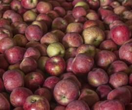 manzanas chihuaha