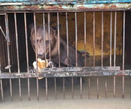 Osos-Inundaciones-Zoologico-Rusia