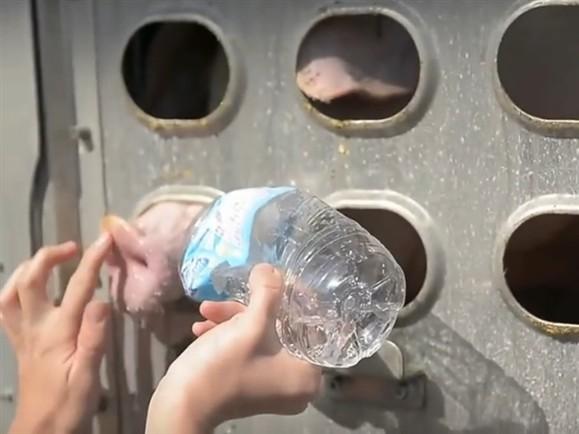 agua puercos