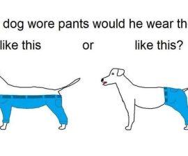 perros pantalones