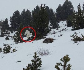 Yeti spotted in Formigal, Spain