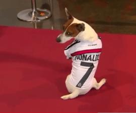 perro cristiano memorial cruyff