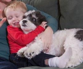 perros-abrazos-1