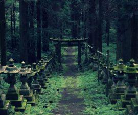 nino-abandonado-bosque