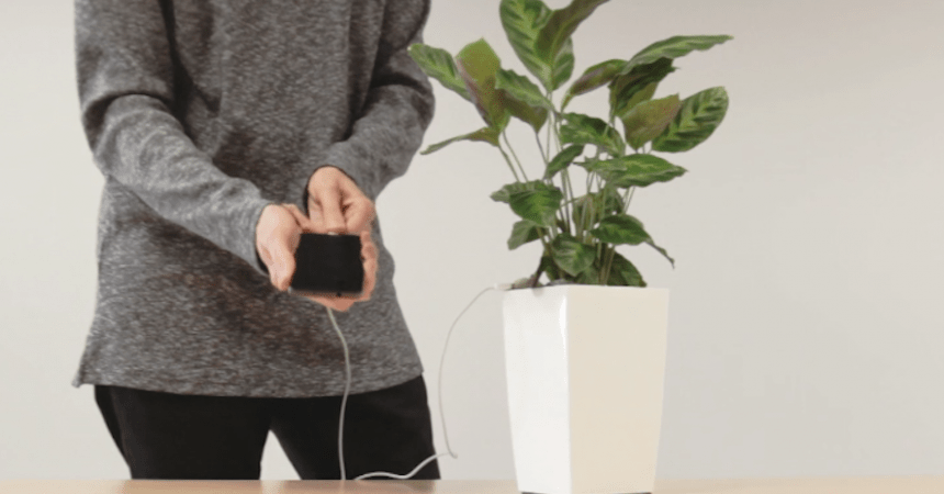 planta celular carga