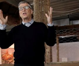 bill gates pollos